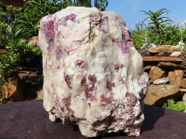 Natural XXL Rubellite Pink Tourmaline In White Quartz With Dark Purple Lepidolite Specimen x 1 from Karibib, Namibia