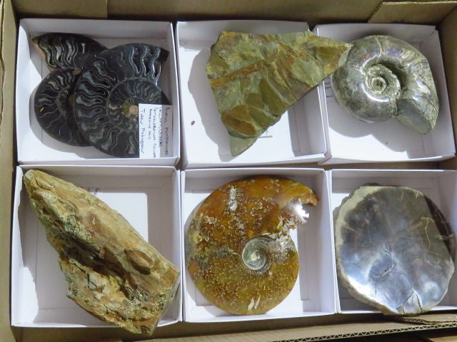 Natural & Polished Mixed Fossils x 6 from Mixed Localities - TopRock