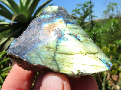 One Side Polished Labradorite Freeforms x 24 from Madagascar