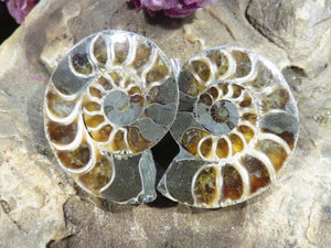 Cut & Polished A Grade Ammonite Pairs x 24 from Tulear, Madagascar
