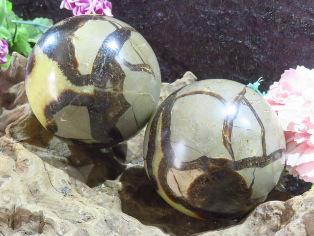 Polished Septerye Balls x 2 from Madagascar