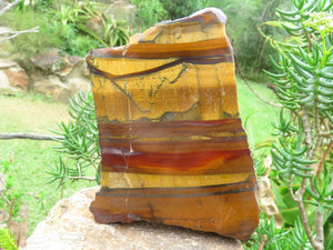 Polished One Side Red Banded Tigers Eye x 4 from South Africa