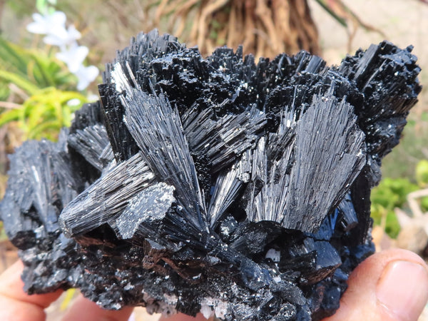 Natural Extra Large Froijite Black Tourmaline Cabinet Sized Crystal Cluster x 1 from Erongo, Namibia