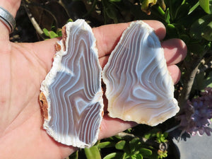 Polished Agate Slices x 12 from Maintero, Madagascar