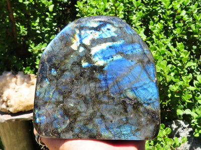 Polished Labradorite Standing Freeform x 1 from Tulear, Madagascar