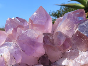 Natural Amethyst Quartz Cluster x 1