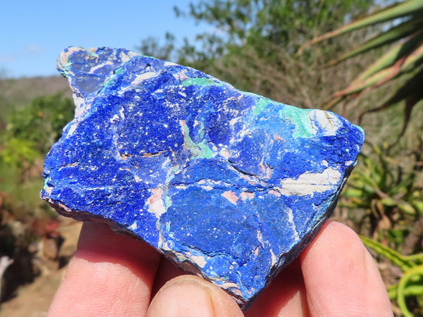 Natural Medium to Large Azurite Crystalline Plates x 12 from Kibwe, Congo