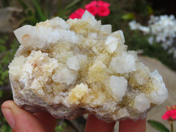 Natural Small Spirit Quartz Crystal Clusters x 6 from Boekenhouthoek, South Africa