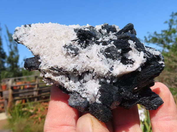 Natural Medium to Large Schorl & Froijite Black Tourmaline With Feldspar Crystals x 6 from Erongo, Namibia