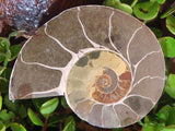 Cut & Polished Ammonite Pairs x 4 from Tulear, Madagascar