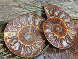Cut & Polished Ammonite Halves x 24 from Tulear, Madagascar - TopRock