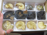 Natural & Polished Ammonite Mix x 12 from Madagascar - TopRock