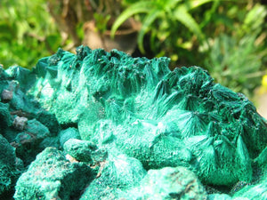 Natural Large Silky Malachite Specimen x 1 from Kasompe , Congo