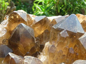 Natural Large Dark Smokey Citrine Quartz Cluster x 1 from Congo