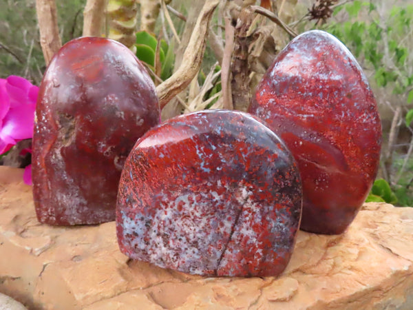 Polished Large Brecciated Red Flower Jasper Standing Free Forms x 3 from Namibia