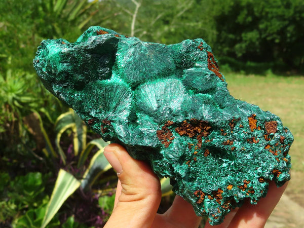 Natural Large Silky Malachite Cabinet Specimens x 2 from Kasompe, Congo