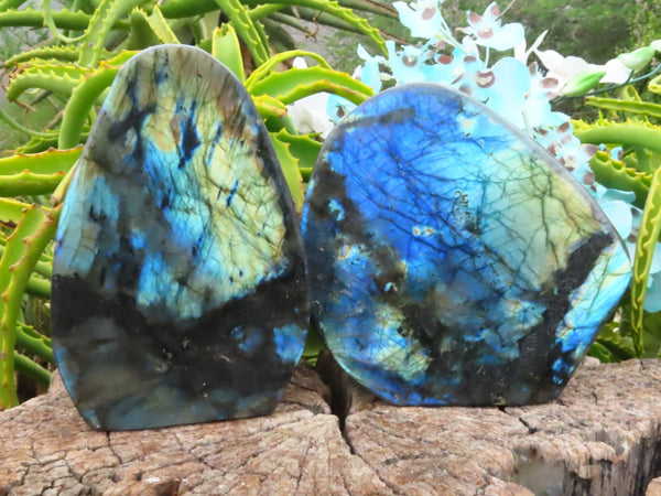 Polished Large Labradorite Standing Free Forms x 2 from Madagascar