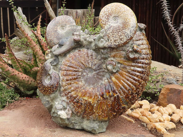 Polished XXL Sealed Conglomerate Ammonite Fossil Standing Sculpture x 1 from Mainterano, Madagascar