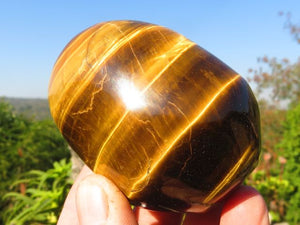 Polished Golden Tigers Eye Freeforms x 12 from Prieska, South Africa