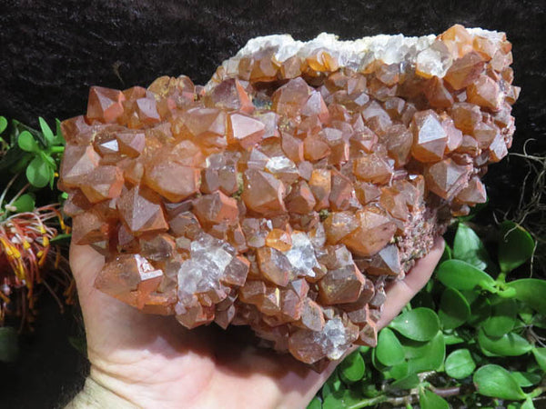 Natural Large Tangerine Quartz Cluster x 1  from Congo