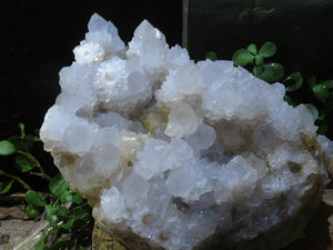 Natural Large White Classic Spirit/Cactus Quartz Cluster x 1  from Kwandebele, South Africa