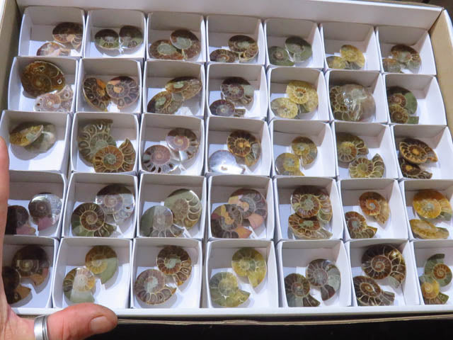 Cut & Polished Ammonite Pairs x 35 from Tulear, Madagascar