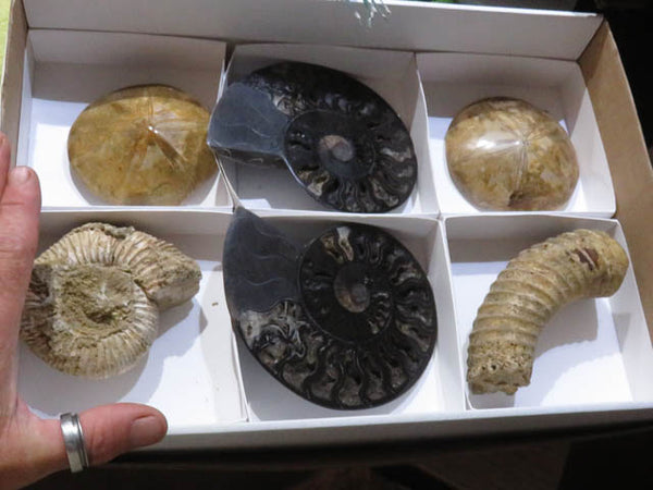 Polished Mixed Large Fossil items x 6 from Madagascar