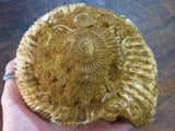 Natural White Spinned Ammonite x 1  from Mahajanga, Madagascar