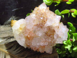 Natural Spirit Quartz Clusters x 15 from Kwandbele, South Africa - TopRock