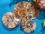 Cut & Polished Ammonite Halves x 18 from Madagascar, Tulear - TopRock