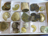 Natural & Polished Mixed Fossils x 15 from Madagascar - TopRock