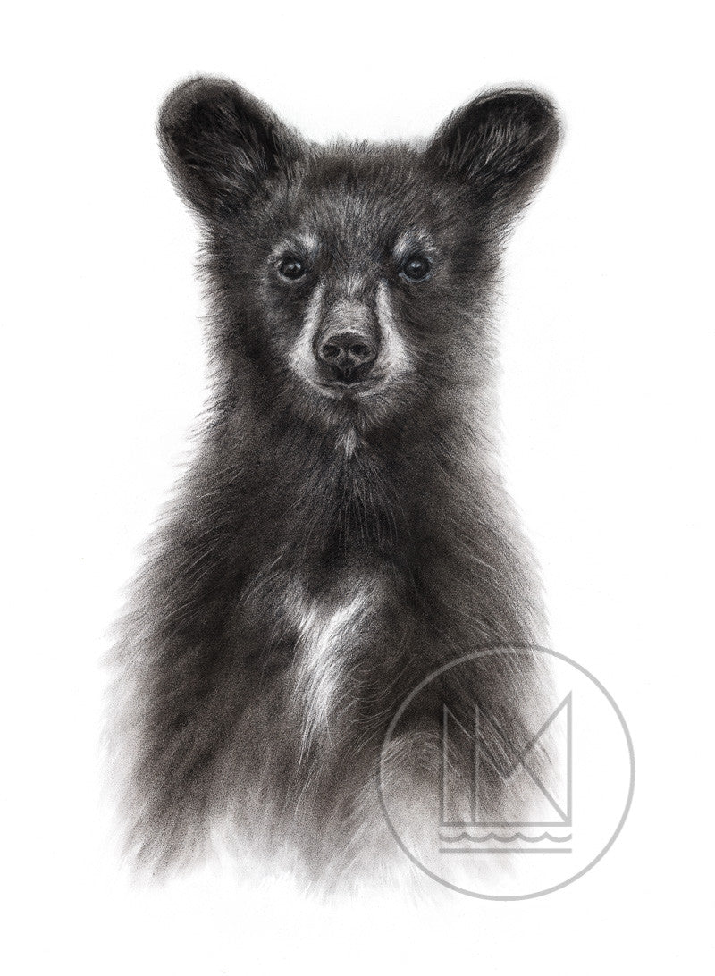 Standing Black Bear Cub Charcoal Drawing