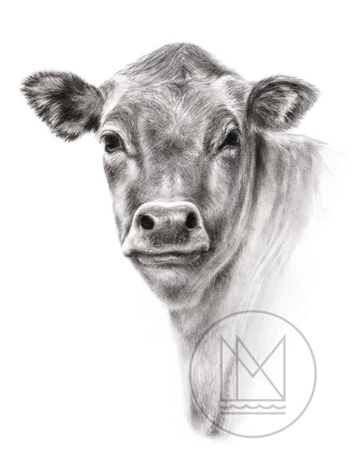 Jersy Cross Cow Charcoal Drawing