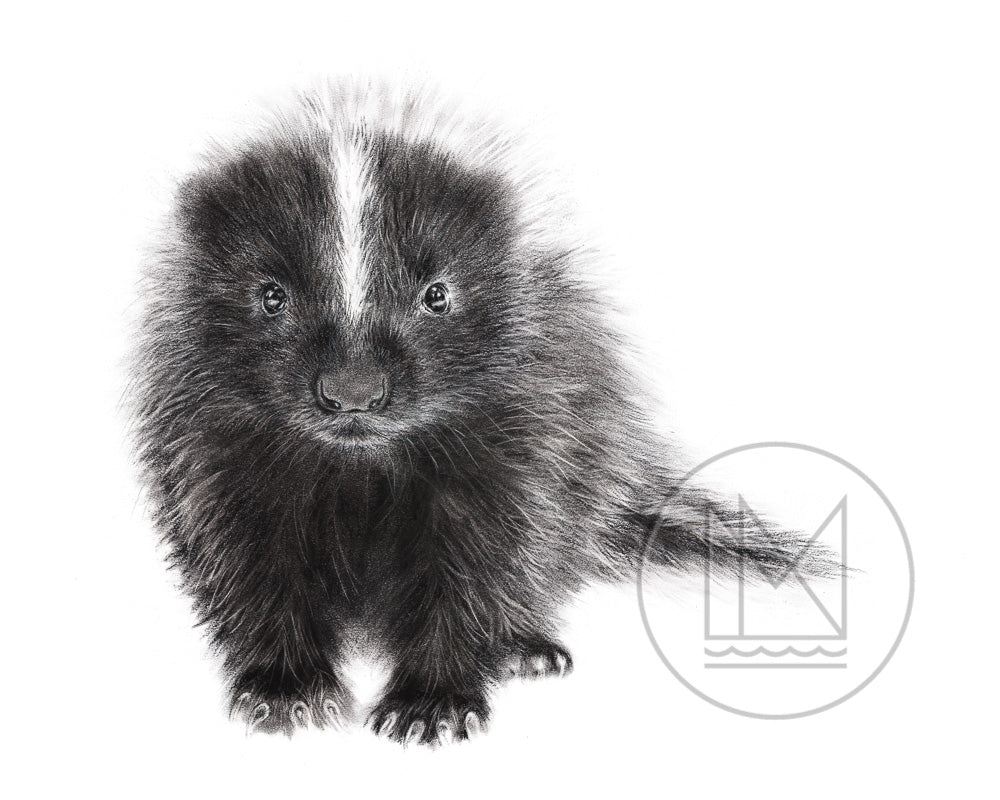 Skunky Kit Charcoal Drawing Canadian Wildlife Art Mississippinorth