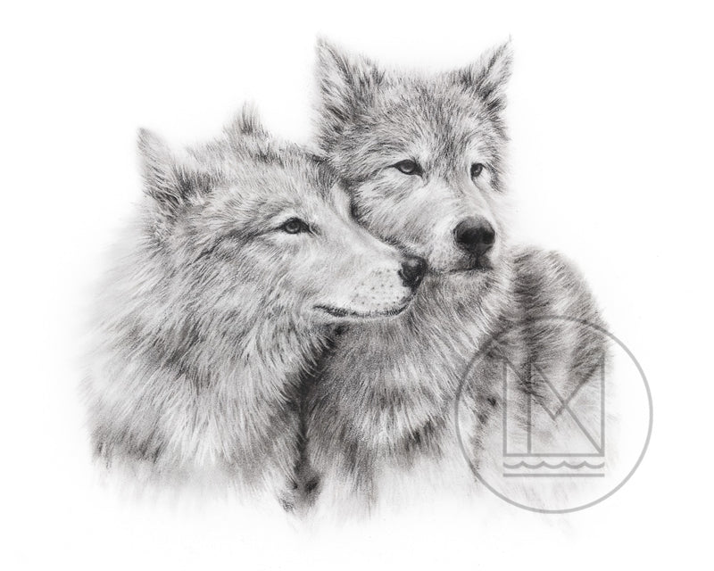 Charcoal drawing of two wolves nuzzling