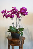 Potted Flower #Orchid