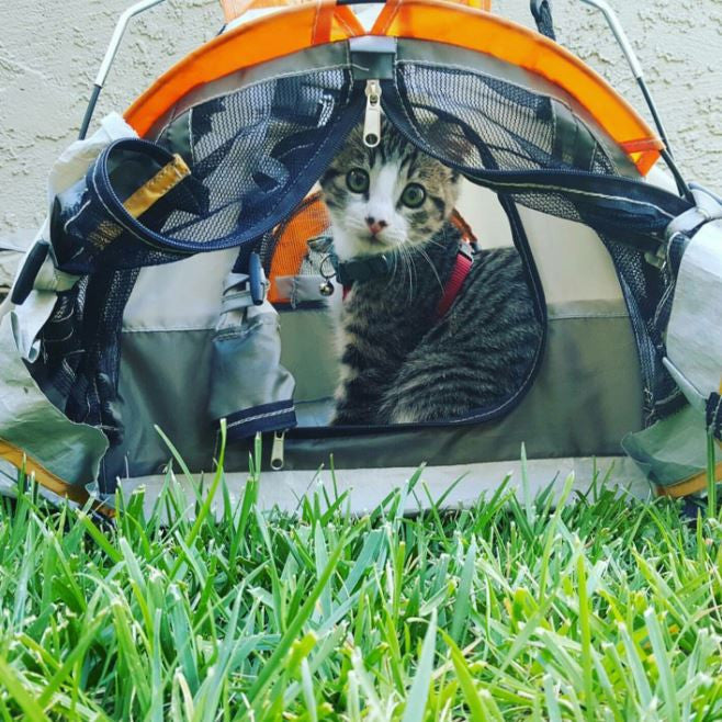 You Can Now Buy Cat and Kitty Tents for Camping