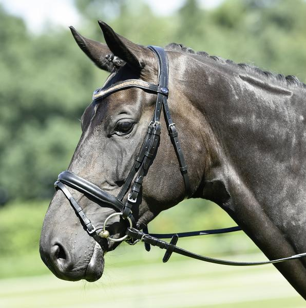 Blog Post 7: Bridles - To fit or not to fit?