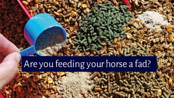 Blog Post 11: Supplements; are you feeding a fad to your horse?
