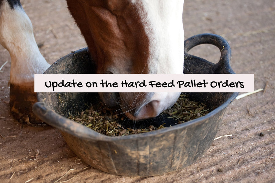Blog Post 13: I Hear You, So Let's Do This - Update on our Hard Feed Pallets