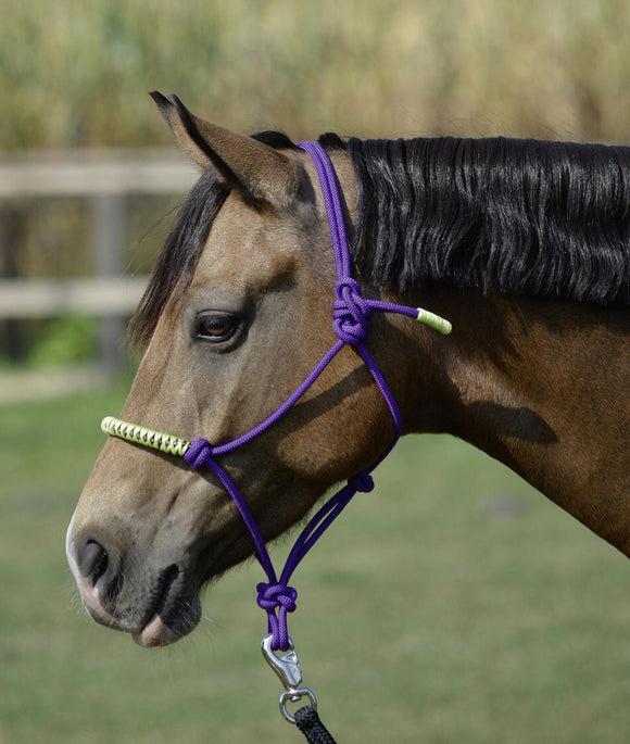 Busse ''Purple Lime Glint'' Rope Halter