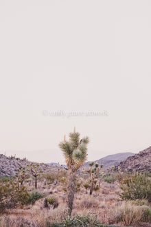 JOSHUA TREE - HUNTER & CO.