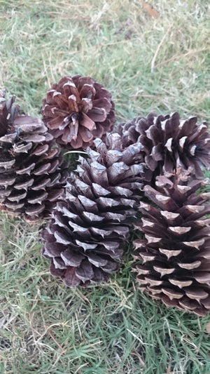 Natural Pinecones, Pinecone decor, DIY, Pinecone Wreath, Pinecone centerpiece, pinecones, supplies, holiday decor, South Carolina pinecones