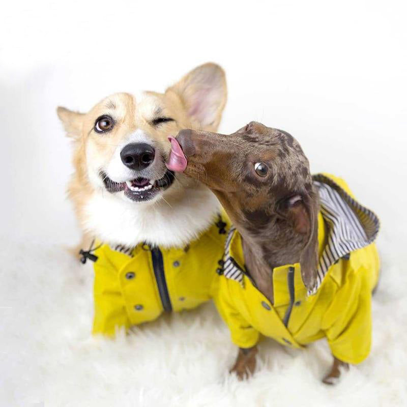 dog windbreaker