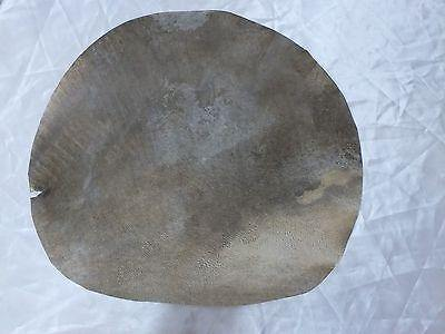 36 cm GOAT ANIMAL SKIN FOR PERCUSSION INTRUMENTS BENDIR  ETC  NEW - unosell music instruments