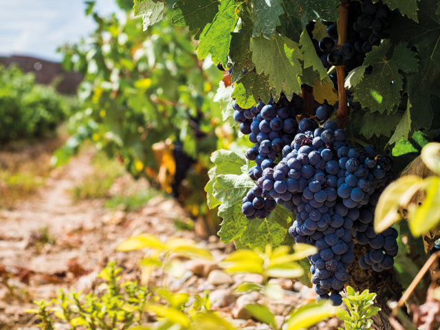 All About Tempranillo