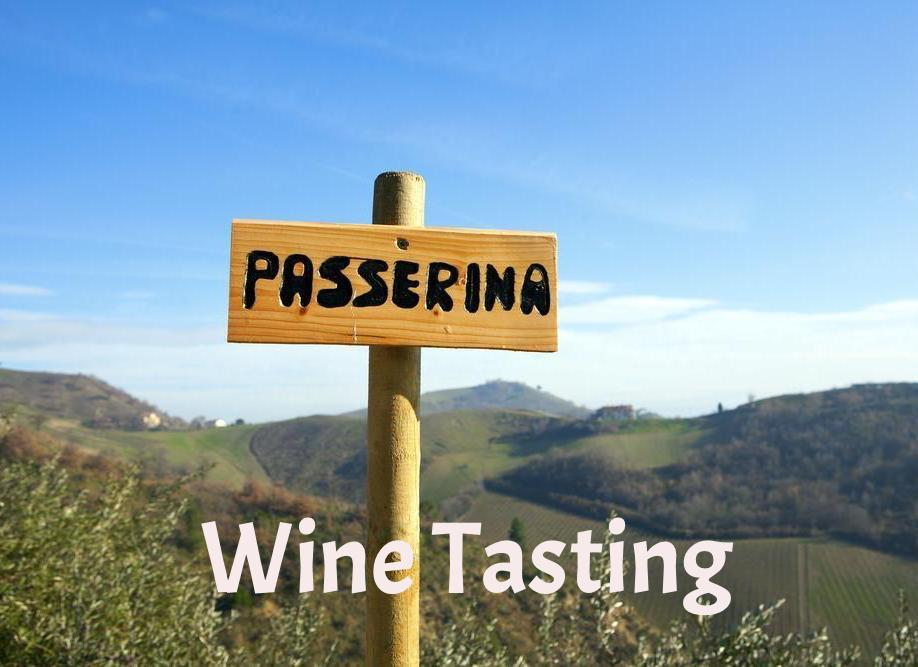 White Wines from Abruzzo