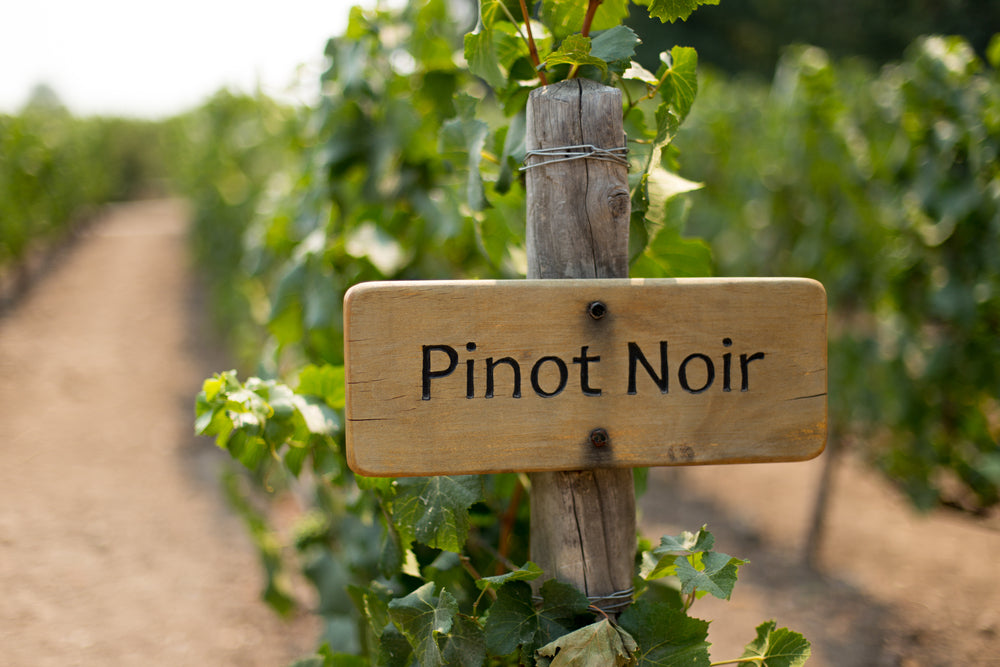 Pinot Noir Great Wine Tasting (with 8 wines)