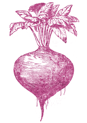 turnip etching