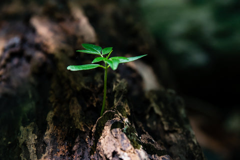 one tree planted initiative